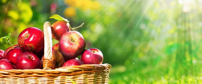 【奇跡のリンゴ】の【リンゴ幹細胞】とはどのようなもの?