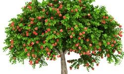 細胞に働きかける! 奇跡のリンゴがもたらす美肌効果